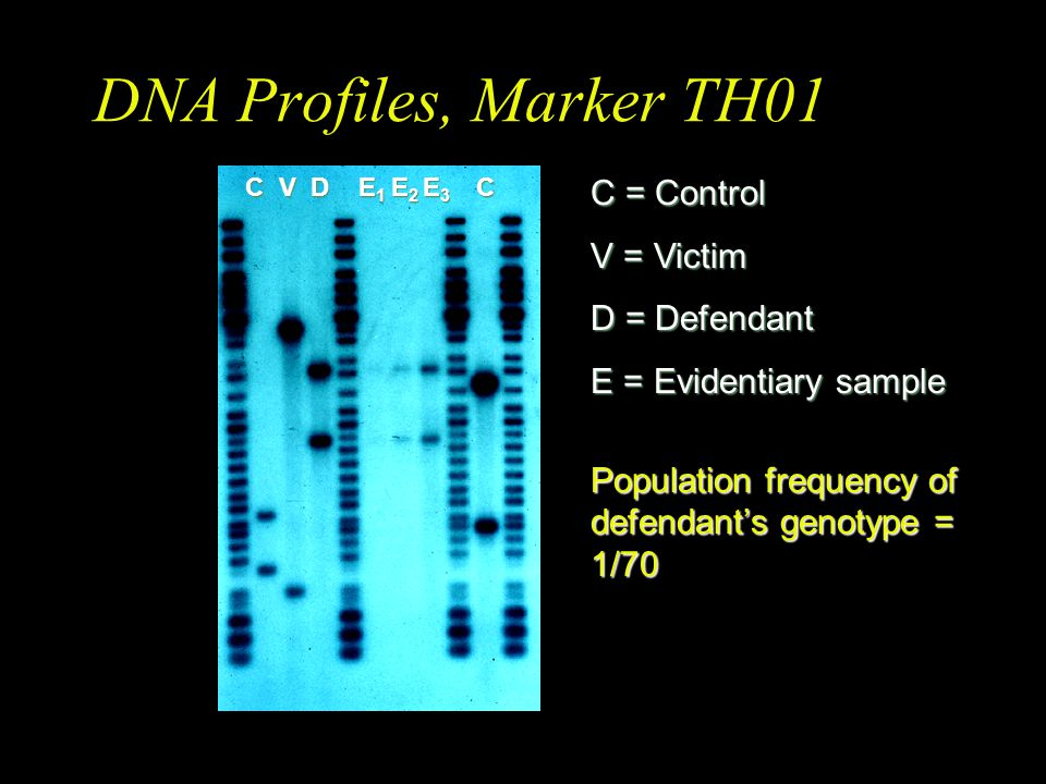 DNA Profiles, Marker TH01 C = Control V = Victim D = Defendant