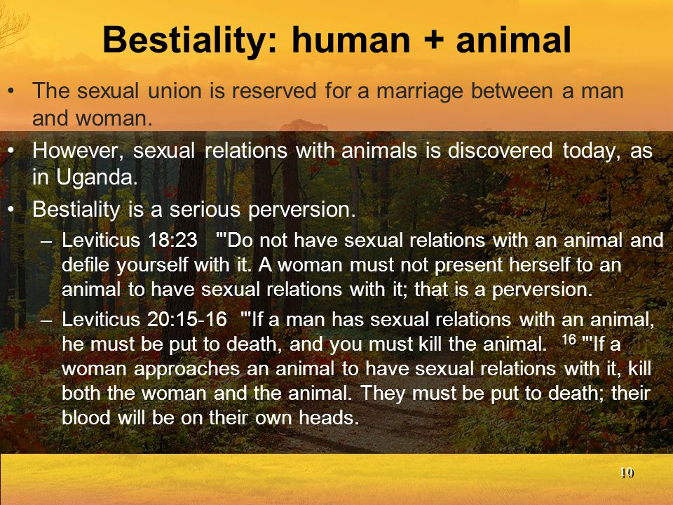 Bestiality: human + animal