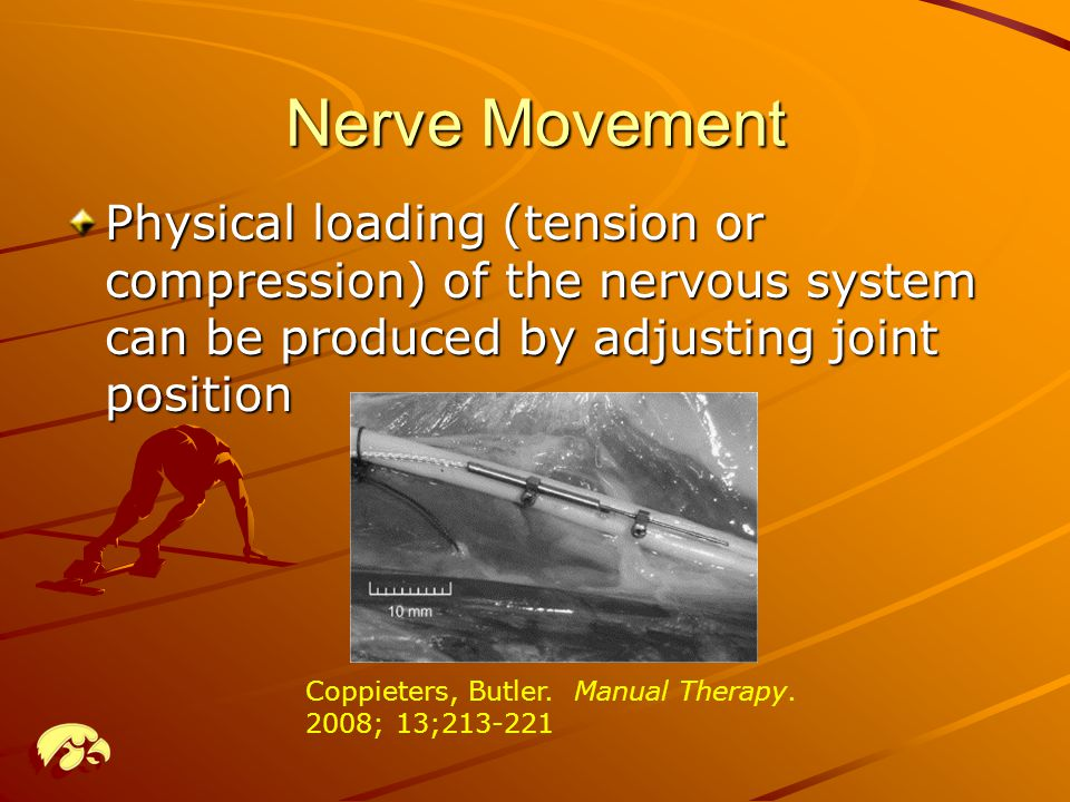 Nerve Movement Physical loading (tension or compression) of the nervous system can be produced by adjusting joint position.