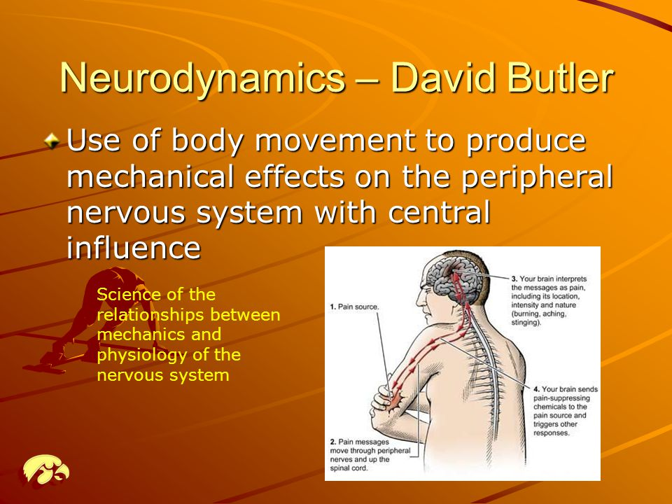 Neurodynamics – David Butler