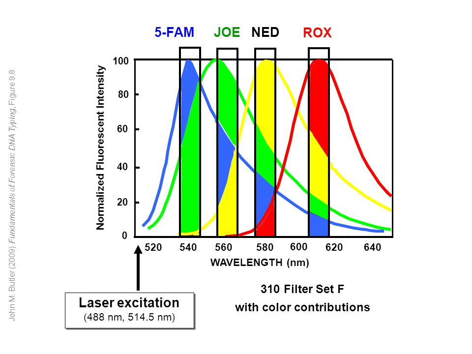 with color contributions Normalized Fluorescent Intensity
