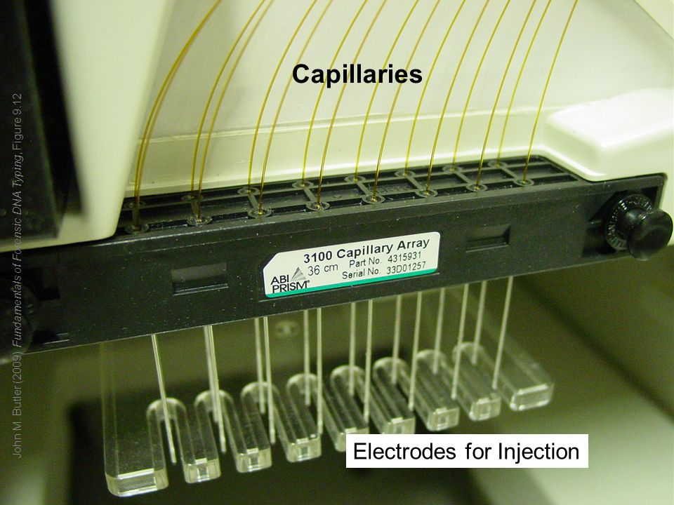 Capillaries Electrodes for Injection