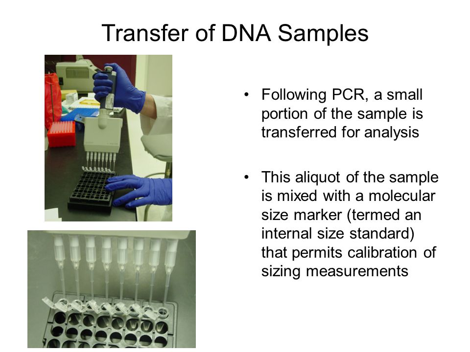 Transfer of DNA Samples