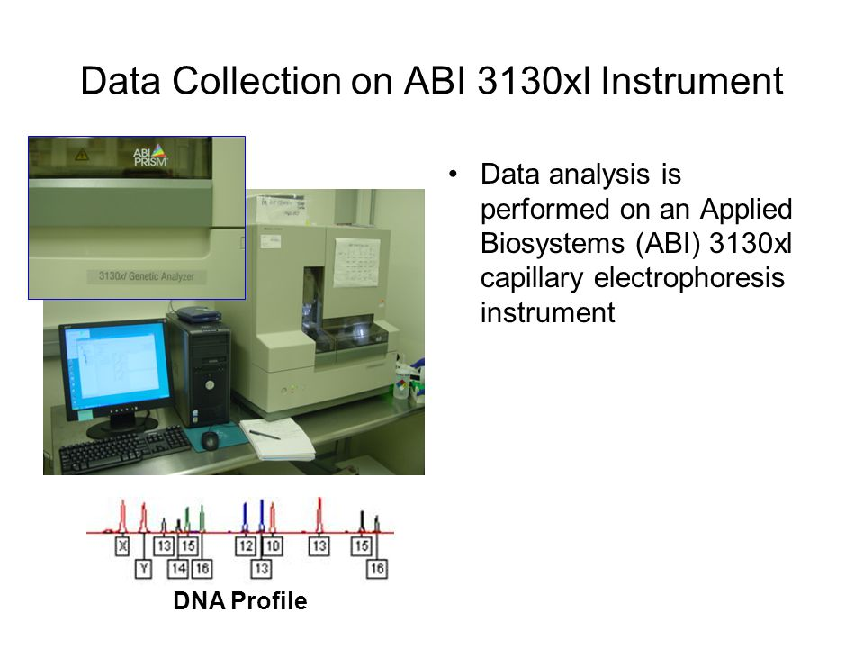 Data Collection on ABI 3130xl Instrument