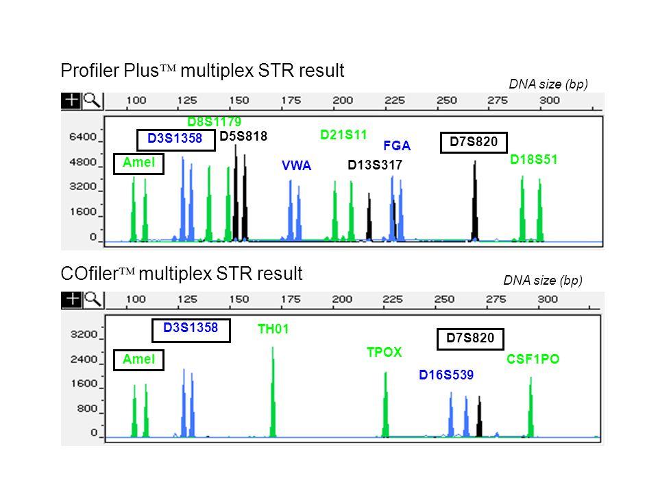 Profiler Plus multiplex STR result