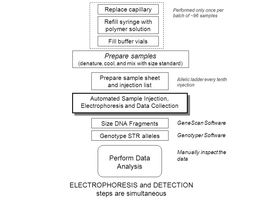 ELECTROPHORESIS and DETECTION steps are simultaneous