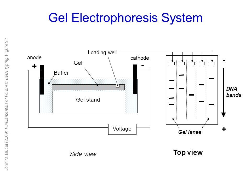 Gel Electrophoresis System