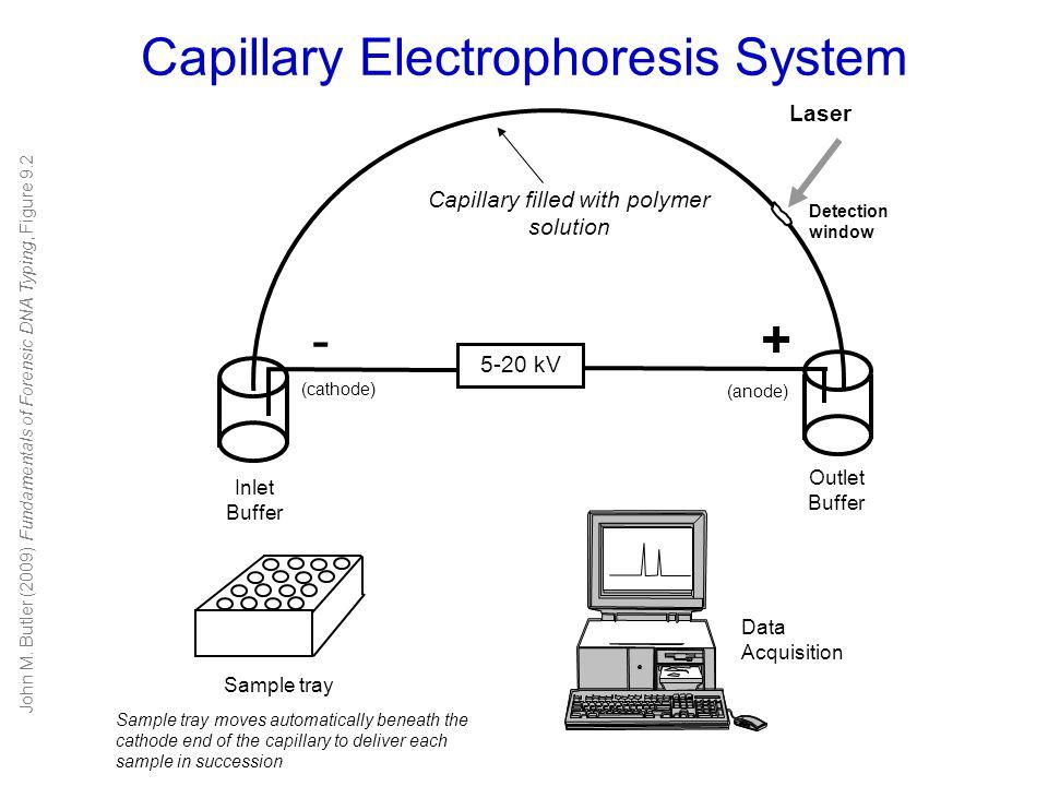 Capillary Electrophoresis System