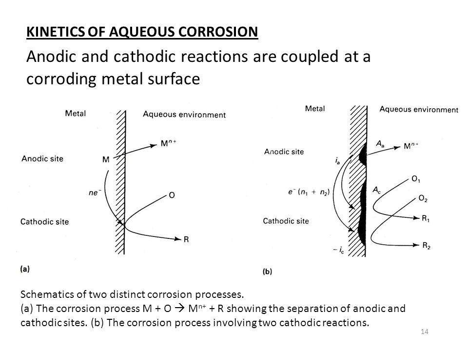 Anodic and cathodic reactions are coupled at a corroding metal surface