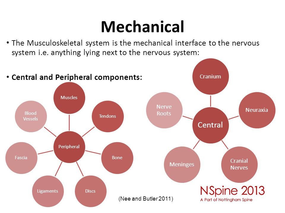 Mechanical The Musculoskeletal system is the mechanical interface to the nervous system i.e. anything lying next to the nervous system: