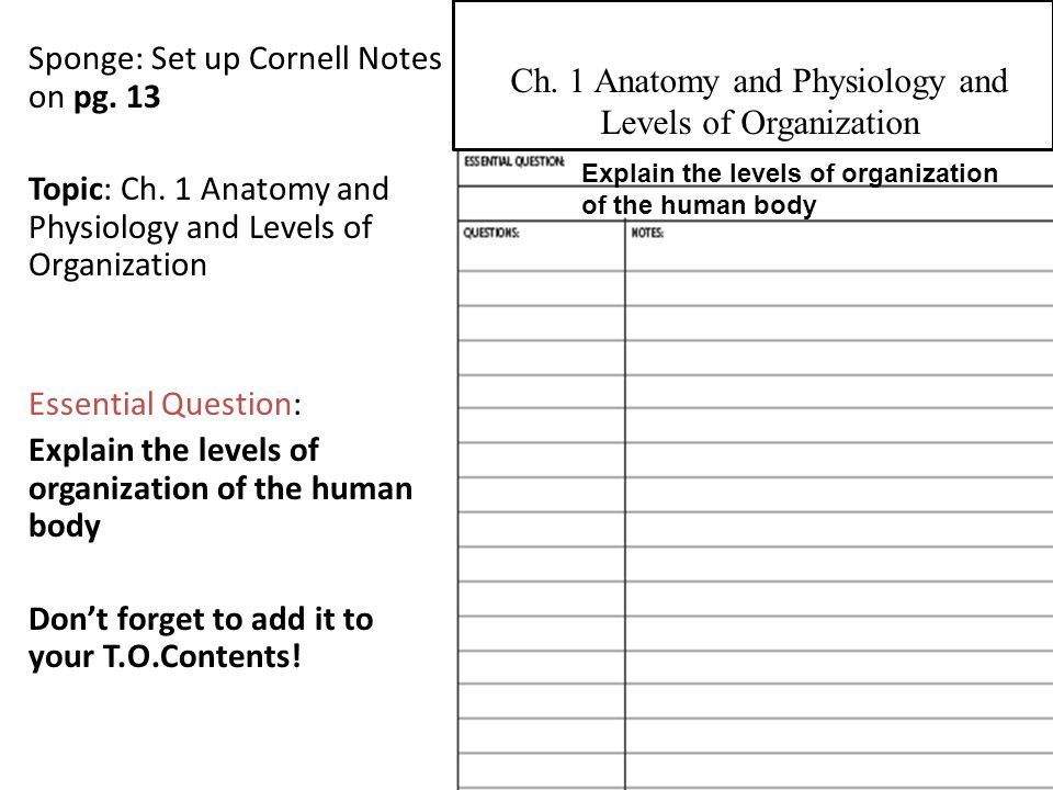 Ch. 1 Anatomy and Physiology and Levels of Organization