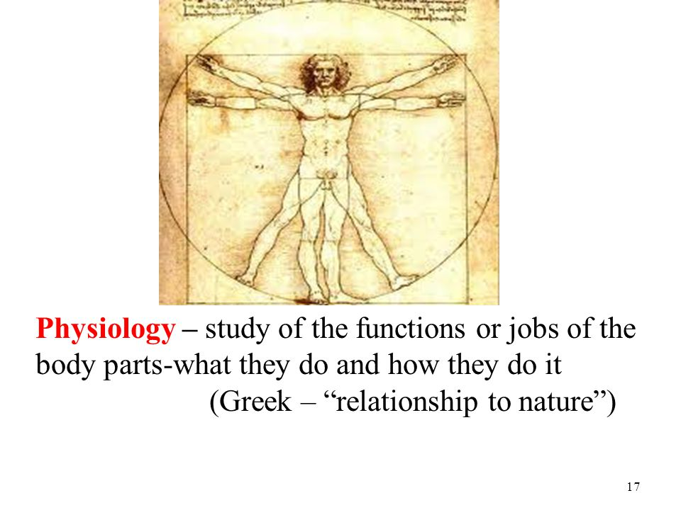 Physiology – study of the functions or jobs of the body parts-what they do and how they do it