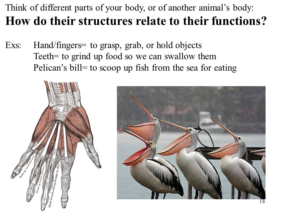 How do their structures relate to their functions