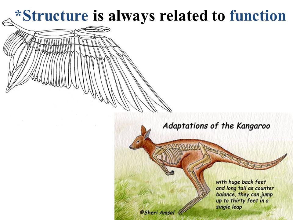 *Structure is always related to function