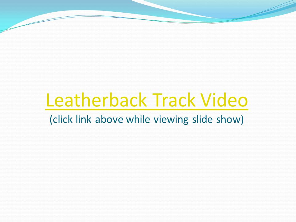 Leatherback Track Video (click link above while viewing slide show)