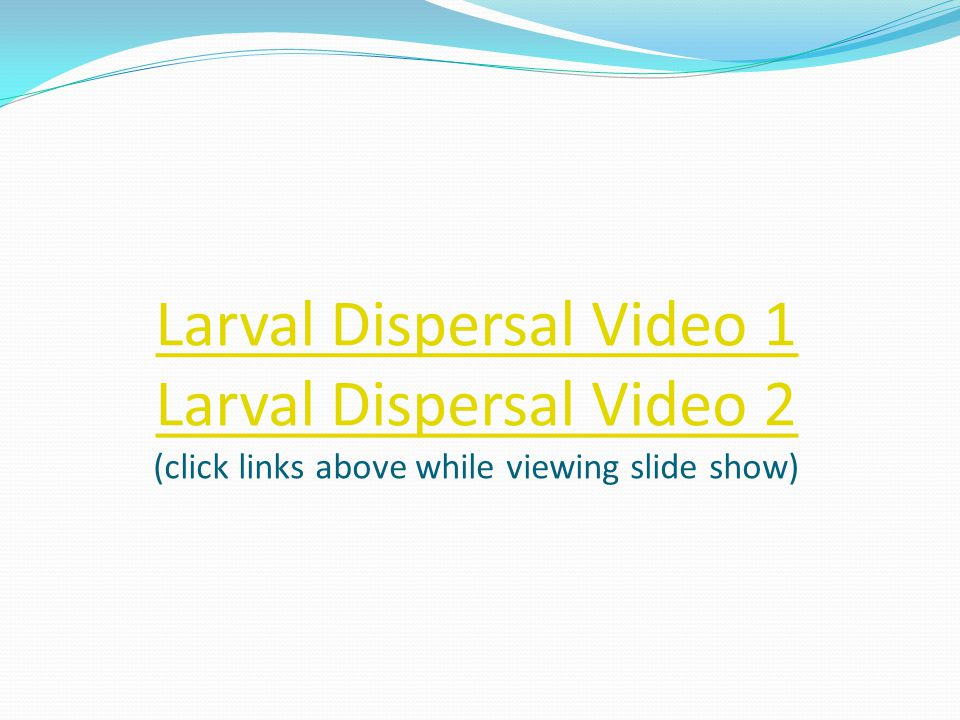 Larval Dispersal Video 1 Larval Dispersal Video 2 (click links above while viewing slide show)