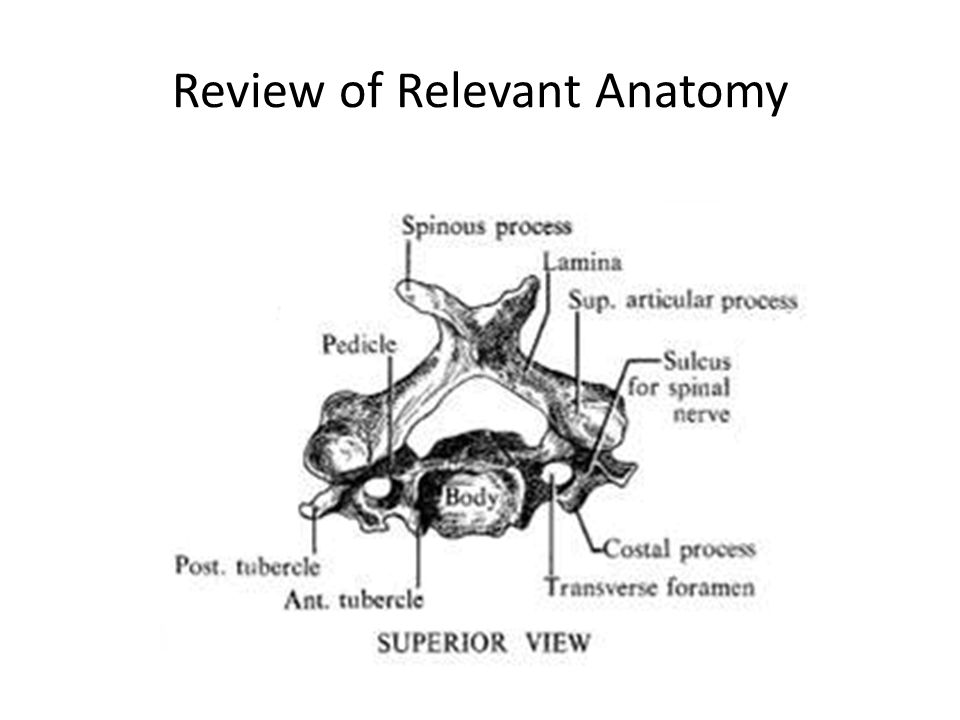 Review of Relevant Anatomy