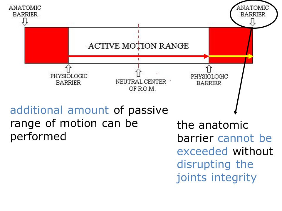 additional amount of passive range of motion can be performed