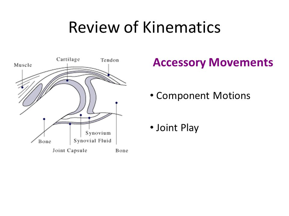 Review of Kinematics Accessory Movements Component Motions Joint Play