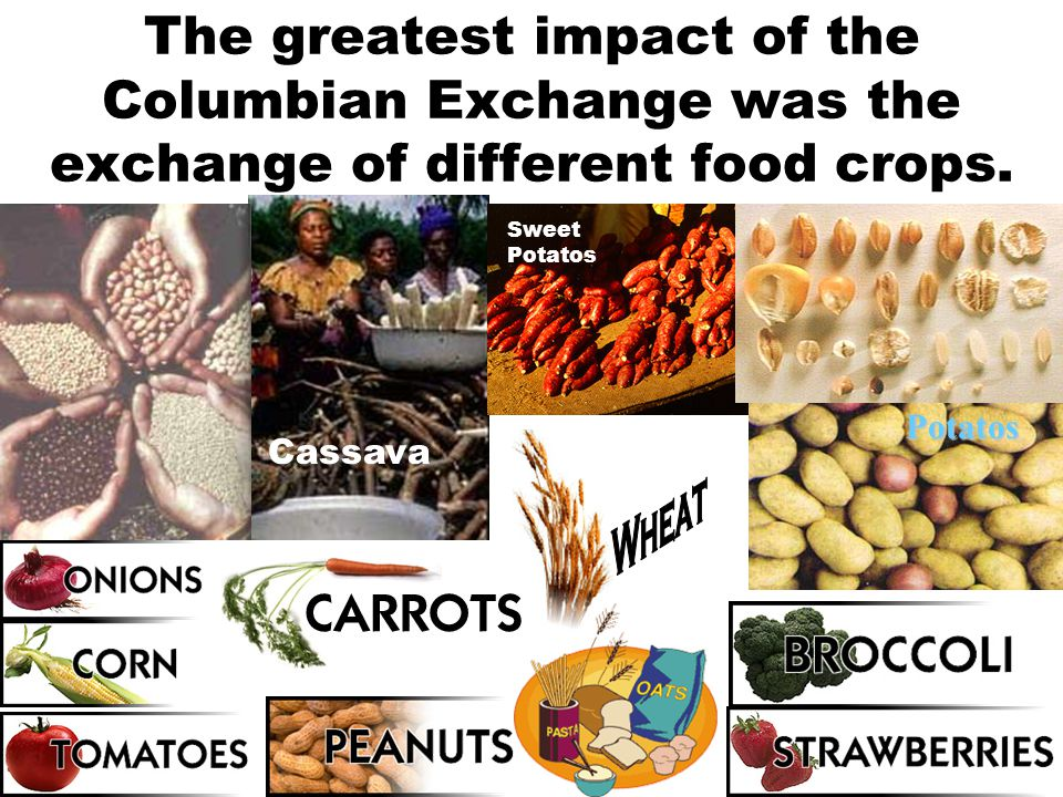 The greatest impact of the Columbian Exchange was the exchange of different food crops.