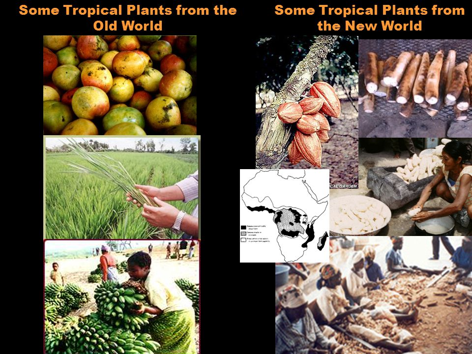 Some Tropical Plants from the Old World