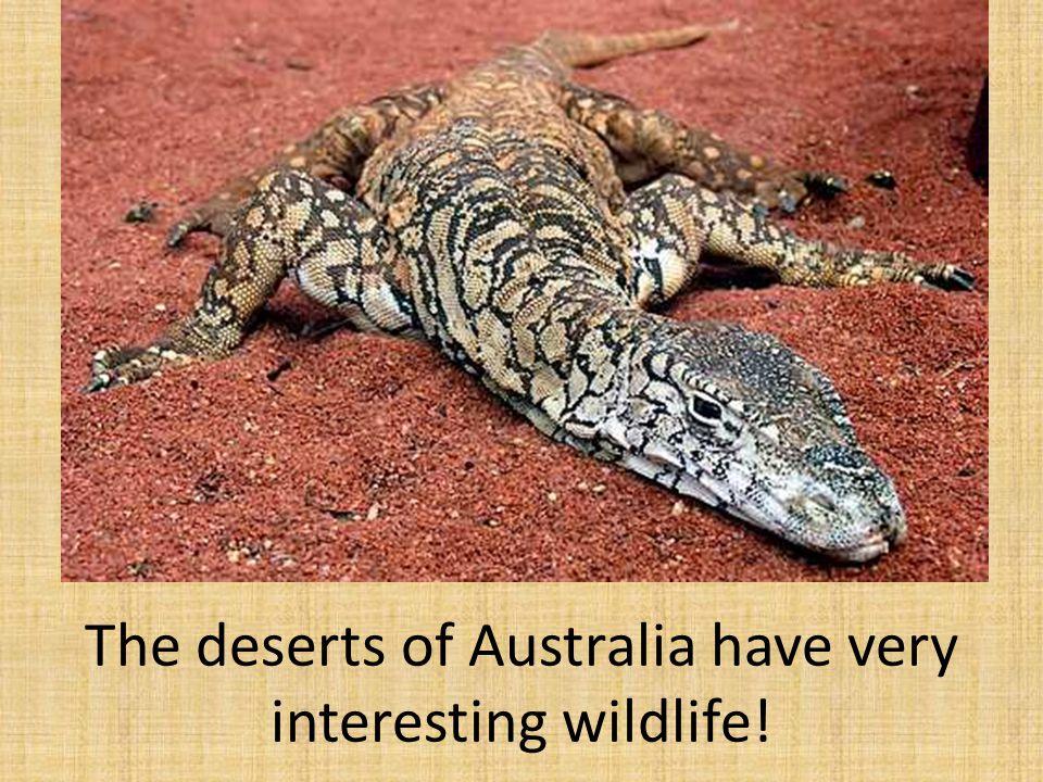 The deserts of Australia have very interesting wildlife!