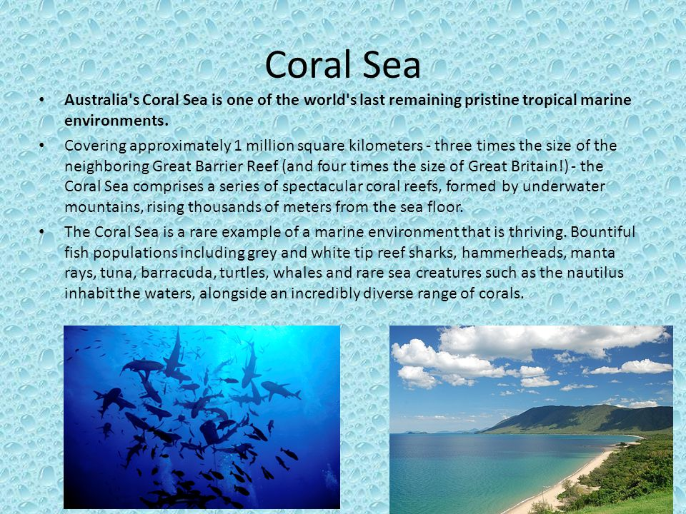 Coral Sea Australia s Coral Sea is one of the world s last remaining pristine tropical marine environments.