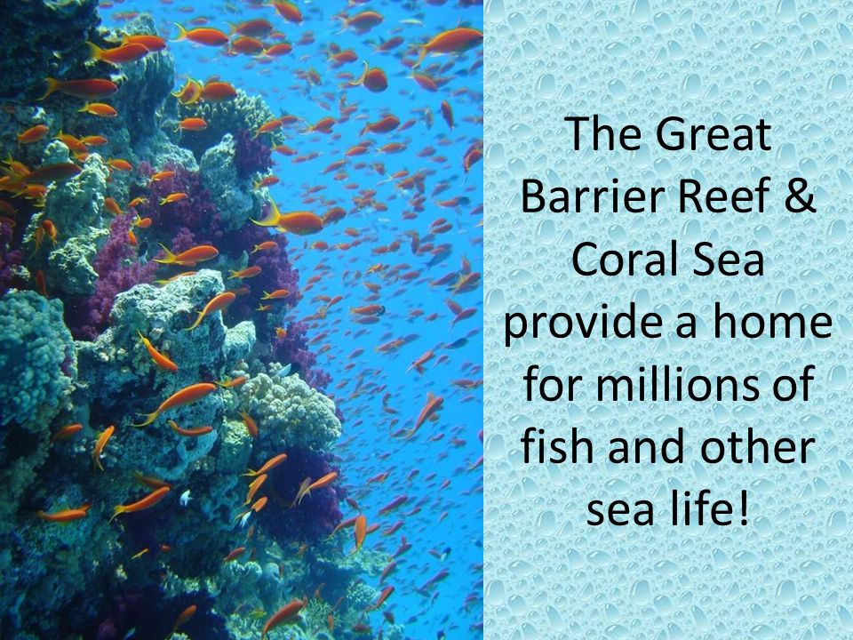 The Great Barrier Reef & Coral Sea provide a home for millions of fish and other sea life!