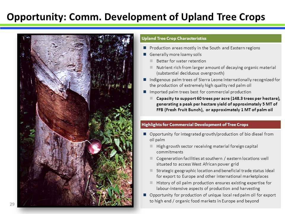 Opportunity: Comm. Development of Upland Tree Crops