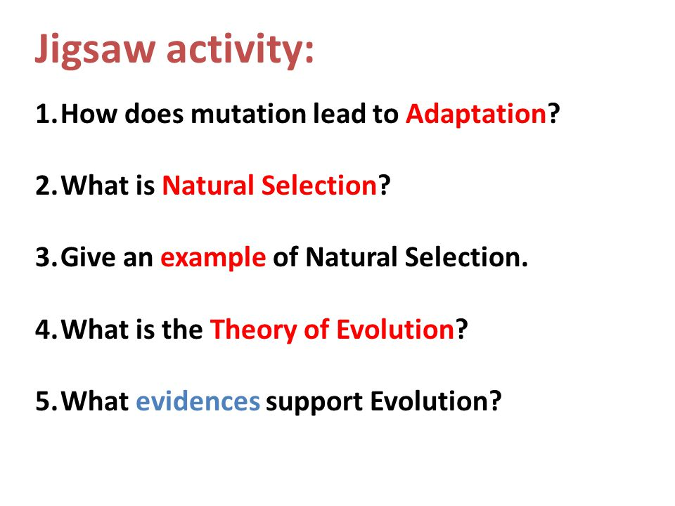 Jigsaw activity: How does mutation lead to Adaptation