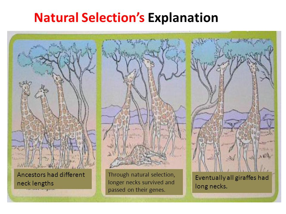 Natural Selection's Explanation