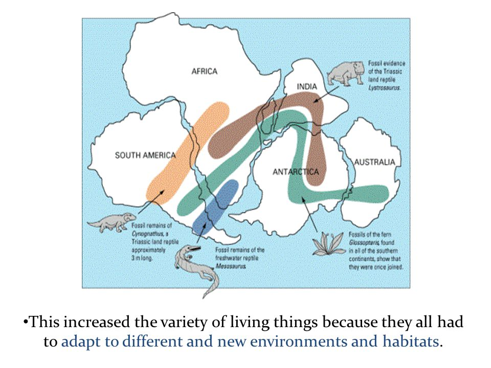 This increased the variety of living things because they all had to adapt to different and new environments and habitats.