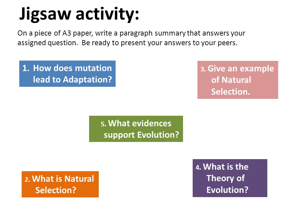 5. What evidences support Evolution