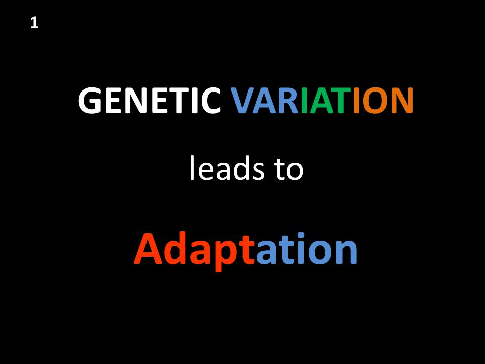 1 GENETIC VARIATION leads to Adaptation