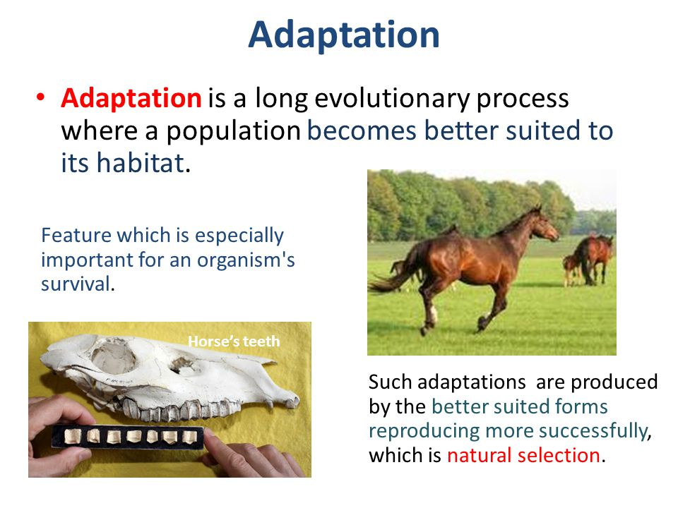 Adaptation Adaptation is a long evolutionary process where a population becomes better suited to its habitat.