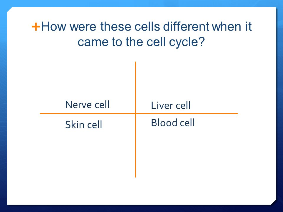How were these cells different when it came to the cell cycle