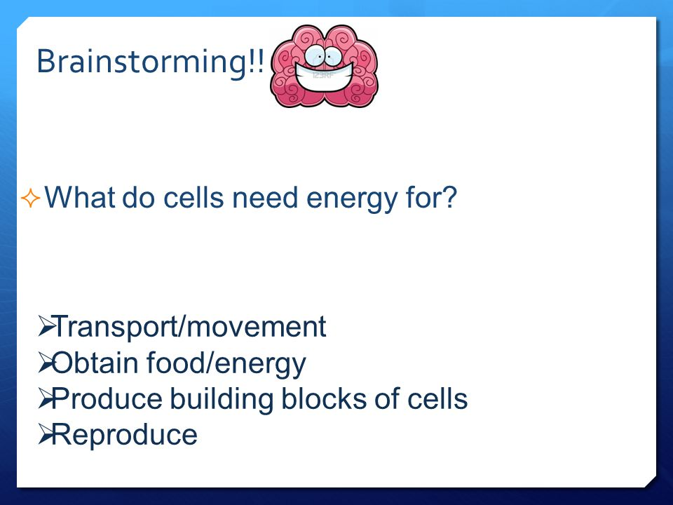 What do cells need energy for