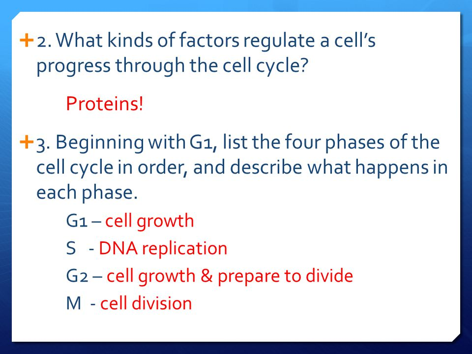 2. What kinds of factors regulate a cell's progress through the cell cycle