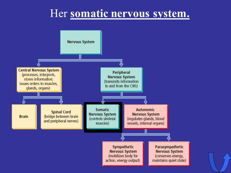 Her somatic nervous system.
