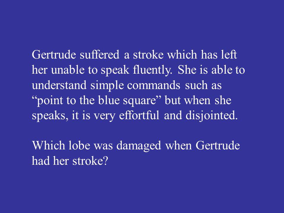 Which lobe was damaged when Gertrude had her stroke