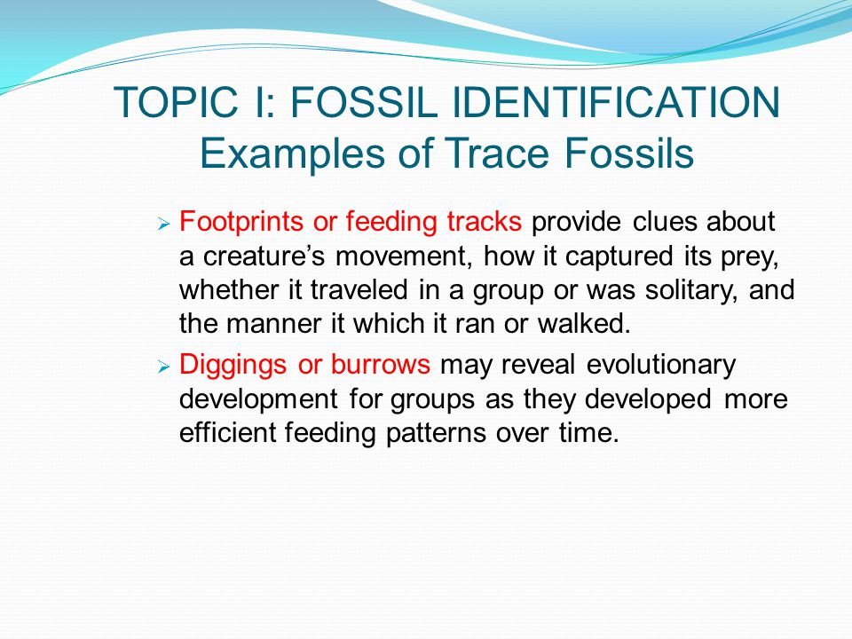 TOPIC I: FOSSIL IDENTIFICATION Examples of Trace Fossils