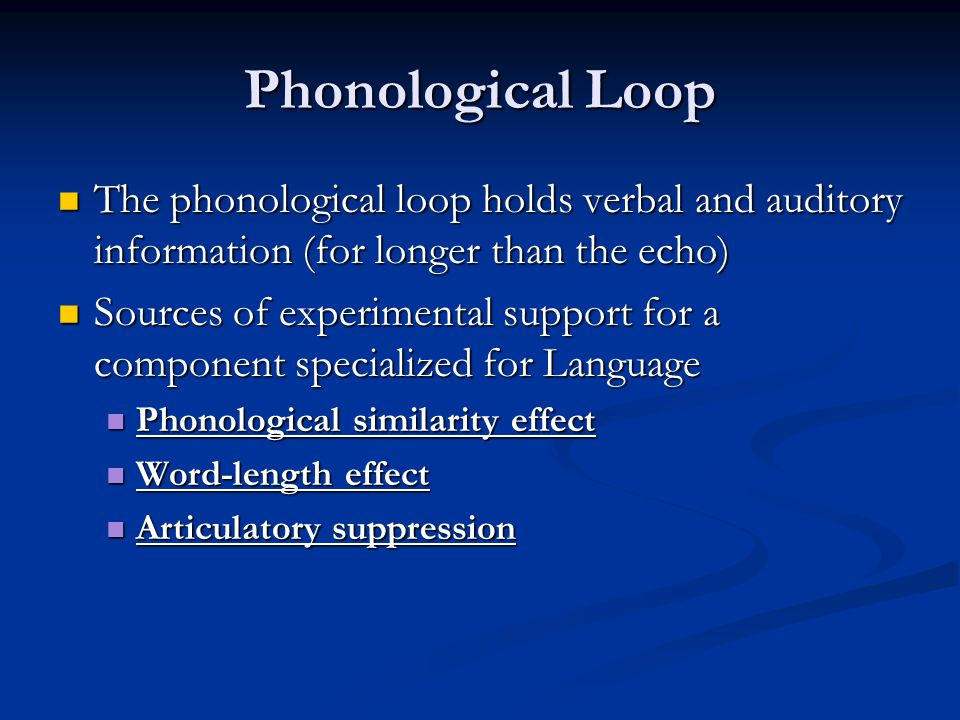 Phonological Loop The phonological loop holds verbal and auditory information (for longer than the echo)