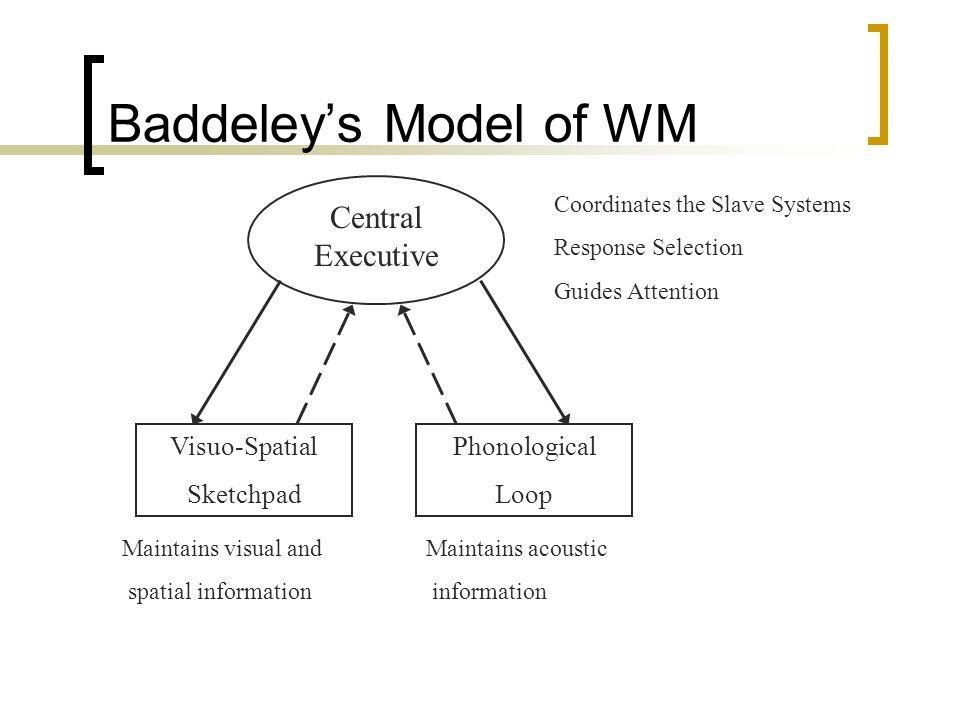 Baddeley's Model of WM Central Executive Visuo-Spatial Sketchpad