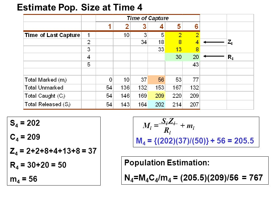 Estimate Pop. Size at Time 4