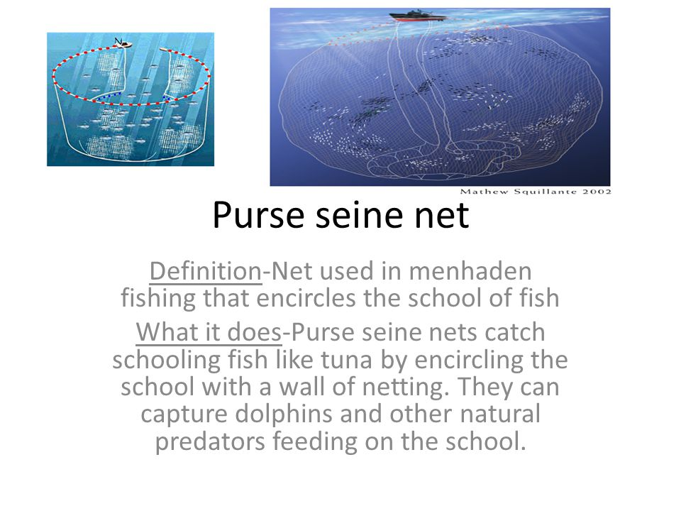 Purse seine net Definition-Net used in menhaden fishing that encircles the school of fish.
