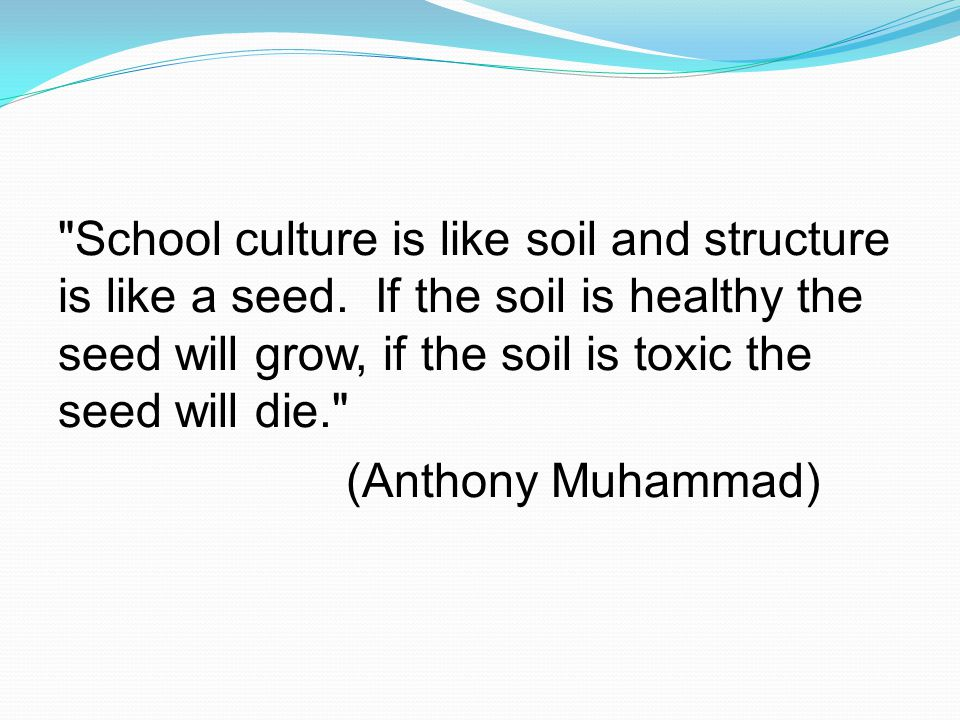 School culture is like soil and structure is like a seed