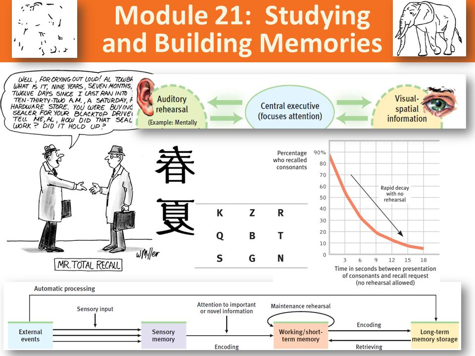 Module 21: Studying and Building Memories