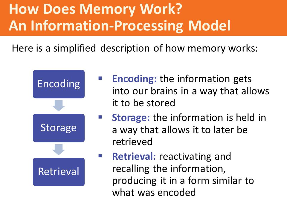 How Does Memory Work An Information-Processing Model