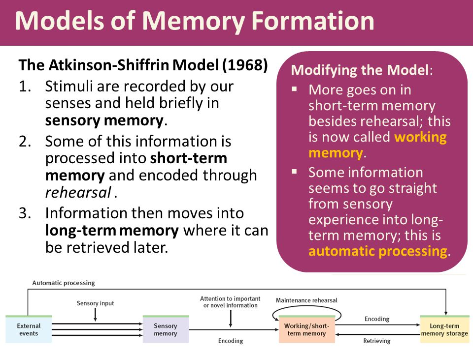 Models of Memory Formation