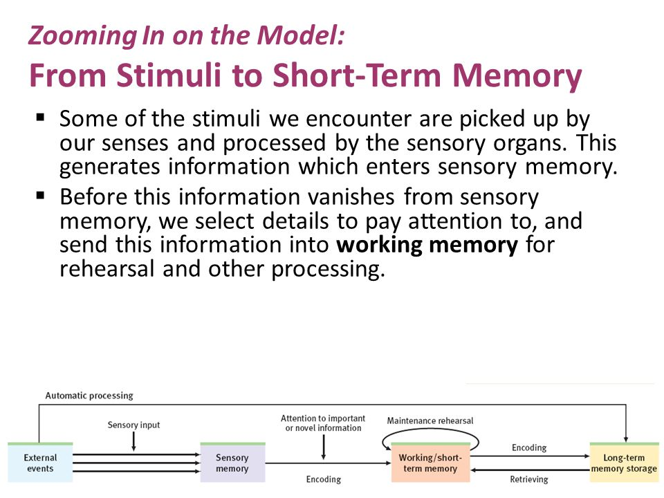 Zooming In on the Model: From Stimuli to Short-Term Memory